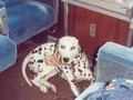 Portare i cani in treno, arriva la normativa