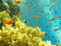 Capodanno 2013, offerte viaggi sul Mar Rosso per stare al caldo