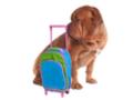 Vacanze estate 2011: gli appartamenti in affitto non accettano animali
