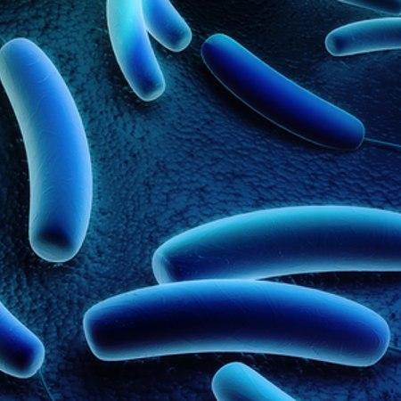 Legionella: sintomi, cure e prevenzione