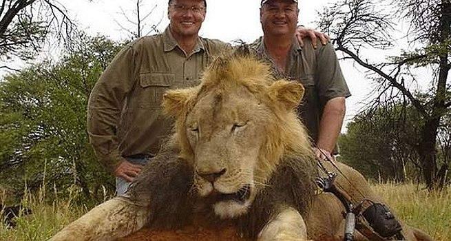 Cecil leone ucciso: caccia al dentista Walter James Palmer che lo ha freddato [FOTO]